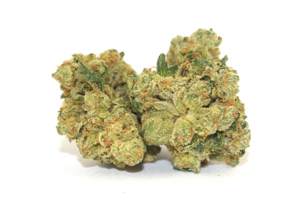 "OG Kush was first cultivated in Florida, in the early '90s when a strain from Northern California was crossed with a Hindu Kush plant from Amsterdam. The result was a hybrid with a unique terpene profile that boasts a complex aroma with notes of fuel, skunk, and spice. The genetic backbone of West Coast cannabis varieties, OG Kush arrived in Los Angeles in 1996 when Matt ""Bubba"" Berger brought it (along with ""The Bubba,"" which was later used to create the famed Bubba Kush) from Florida to legendary cultivator Josh D. Since then, OG Kush has become a worldwide staple used to create numerous famous strains like GSC and Headband. There are many different phenotypes of OG Kush, including Tahoe OG, SFV OG, and Ghost OG."