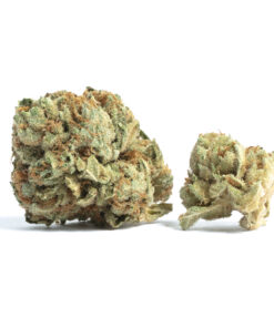Tahoe OG is the perfect rainy day strain. Strong and fast-acting, you may not want to use this strain when you're planning to leave the house. Great for those suffering from insomnia, pain, or lack of appetite, Tahoe OG has made a name for itself among other indicas. A top nighttime strain, it provides an extremely lazy, heavy body sensation. Due to superb breeding, Tahoe OG embodies all of the typical indica effects with an added euphoric, sativa-like kick. This strain features an earthy, lemon taste, and is a phenotype of OG Kush. Maturing at around 10 weeks, Tahoe OG is a must-try for those looking for a great night's sleep.