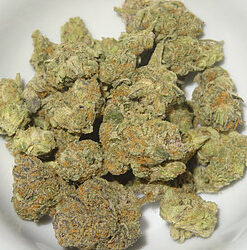 Hybrid Strains, what are hybrid cannabis strains, Kush (Cannabis), Kush City, Kush Definition, Kush drug, Kush effects, Kush meaning, Kush names and pictures, Kush supply, Long term effects of marijuana's, Long term side effects of marijuana's, OG Kush Strain, Packwood Pre-Rolls, marijuana effects purple Kush, So what exactly is Kush, Synthetic, Cannabinoids, Synthetic Marijuana, what is Kush Cannabis, What is Marijuana