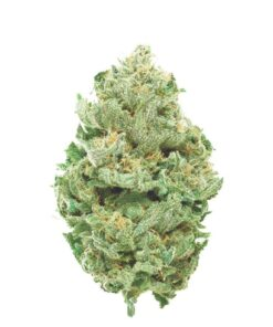 Blue Dream, a sativa-dominant hybrid originating in California, has achieved legendary status among West Coast strains. Crossing Blueberry with Haze, Blue Dream balances full-body relaxation with gentle cerebral invigoration. Novice and veteran consumers alike enjoy the level effects of Blue Dream, which ease you gently into a calm euphoria. With a sweet berry aroma redolent of its Blueberry parent, Blue Dream delivers swift symptom relief without heavy sedative effects. This makes Blue Dream a popular daytime medicine for patients treating pain, depression, nausea, and other ailments requiring a high THC strain.