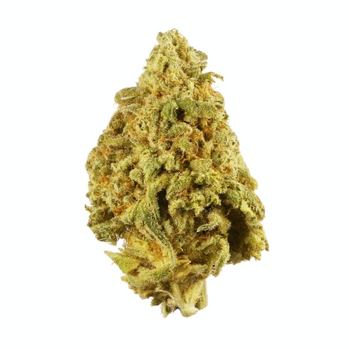 9 Pound Hammer is an indica created by JinxProof Genetics that crosses Gooberry, Hells OG, and Jack the Ripper. These dense buds are coated in resin, offering sweet grape and lime flavors. 9 Pound Hammer hosts a terpene profile abundant in myrcene, pinene, and caryophyllene with THC levels ranging between 17-21%. Effects can be heavy and long-lasting, making this strain useful for pain and stress relief. Best grown indoors, 9 Pound Hammer flowers between 50-60 days and will deliver high yields.