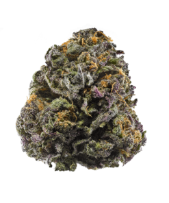 Some even go so far as to speculate that these two strains may be in fact the same. Others simply say that they are so eerily similar in lineage, look, taste, and effects that they are simply confused with one another by growers, dispensaries, and consumers alike. Perfect for night time use Grand Daddy Purple hits both the body and mind initially but quickly fades into a smooth body buzz like most heavy Indicas do. For patients Granddaddy Purps is ideal for pain management. It can also be effective at treating insomnia, depression and anxiety. Novice users beware though, this strain can pack a powerful punch. We'd recommend starting with a hit or two and waiting a few minutes before opting to consume more Granddaddy Purple grows best indoors but can be grown outside as well. Flowering commences usually around 70-77 days when grown indoors and growers can expect harvest in early October when grown outdoors. The oversized buds may begin to weigh down the plant, especially if grown outdoors. When grown indoors the plant should be short and stocky enough to hold the weight but you may want