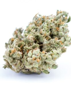 Jack Herer is a sativa-dominant cannabis strain that has gained as much renown as its namesake, the marijuana activist and author of The Emperor Wears No Clothes. Combining a Haze hybrid with a Northern Lights #5 and Shiva Skunk cross, Sensi Seeds created Jack Herer hoping to capture both cerebral elevation and heavy resin production. Its rich genetic background gives rise to several different variations of Jack Herer, each phenotype bearing its own unique features and effects. However, consumers typically describe this 55% sativa hybrid as blissful, clear-headed, and creative. Jack Herer was created in the Netherlands in the mid-1990s, where it was later distributed by Dutch pharmacies as a recognized medical-grade strain. Since then, this spicy, pine-scented strain has taken home numerous awards for its quality and potency. Many breeders have attempted to cultivate this staple strain themselves in sunny or Mediterranean climates, and indoor growers should wait 50 to 70 days for Jack Herer to flower.